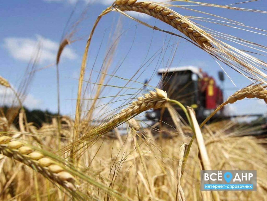 Какой пакет документов необходим для экспорта сельскохозяйственной продукции (видео)