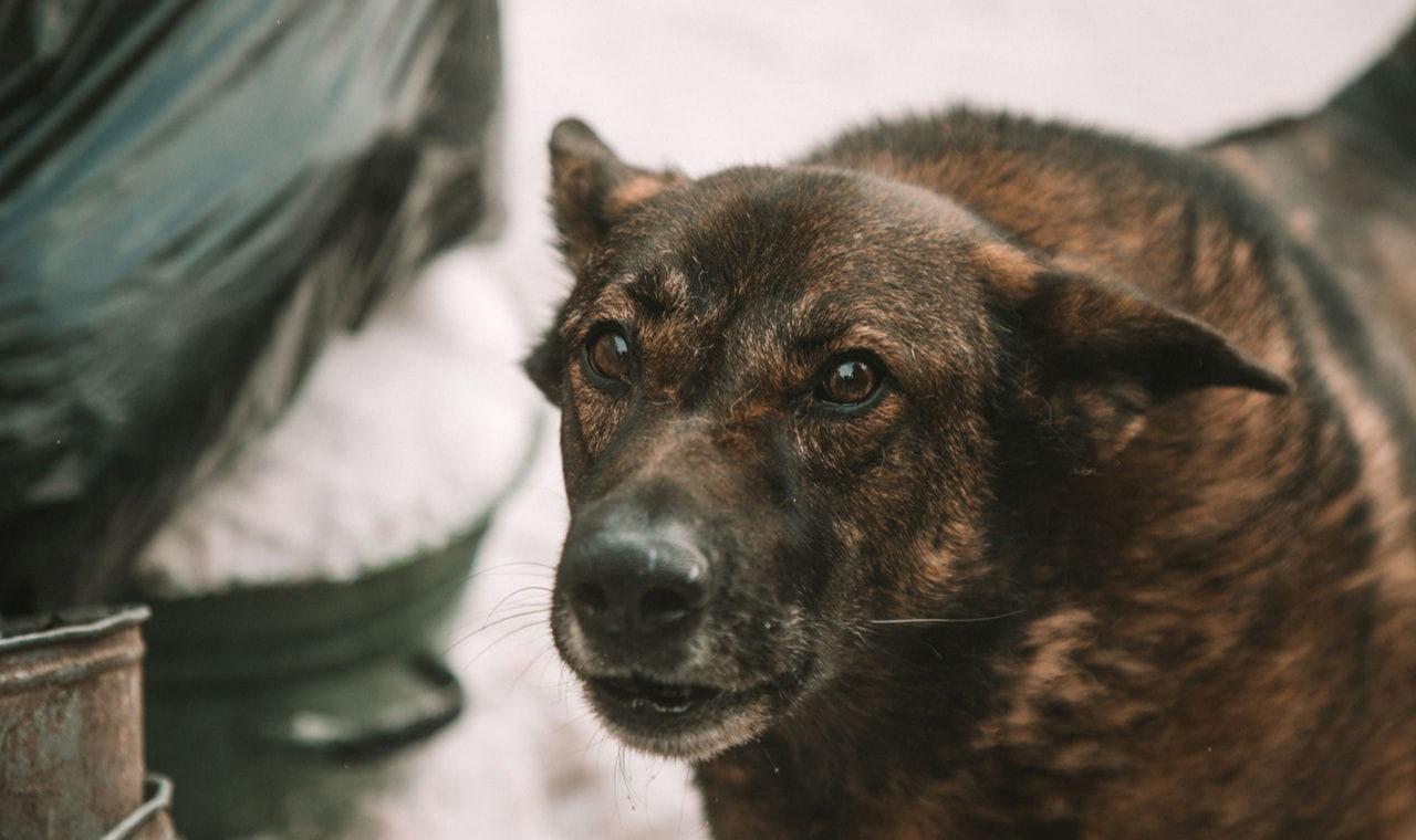 Под Енакиево бездомные собаки напали на детей